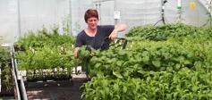 La jardinière aromatique - Jardinière